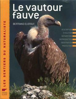 vautour_fauve-2.jpg