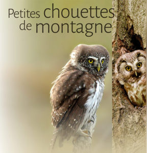 "3rd meeting of the national network ""Small mountain owls"""