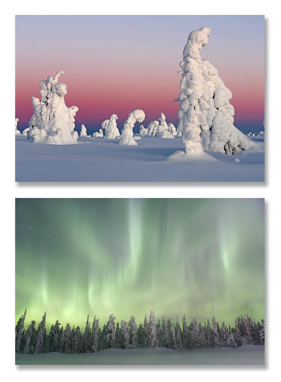 Finlande, chouettes, aurores boréales
