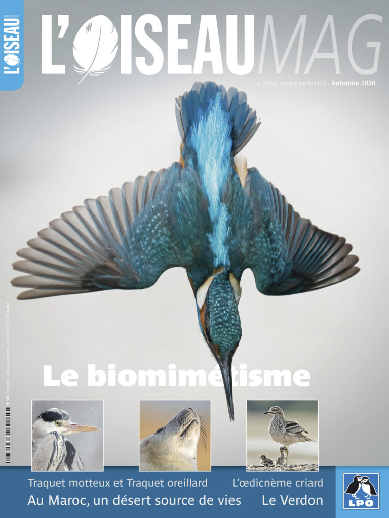Oiseaumag 140