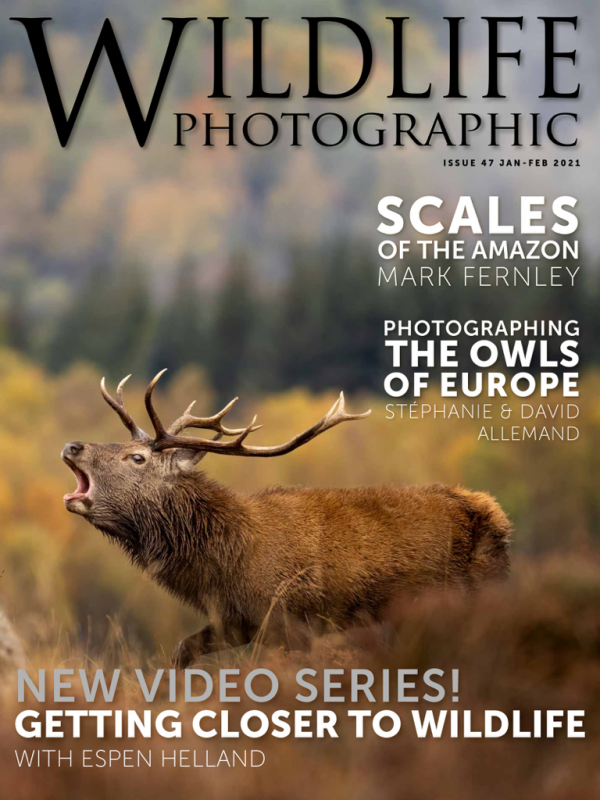 Wildlife Photographic Magazine numéro 47